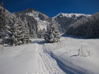 обои Вперед по следу снегохода фото