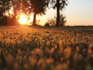 обои Закат солнца над лужайкой  фото