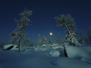 обои Зимний ночной пейзаж леса фото