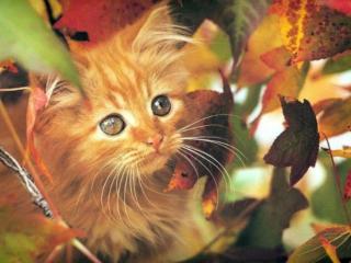 обои Котёнок среди осенних листьев фото
