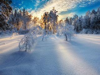 обои Солнечное утро в лесу фото