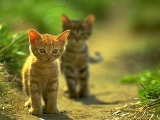 обои Котята  на прогулке фото