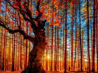 обои Корявое дерево в лучах солнца фото