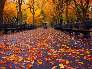обои Осенняя аллея в парке фото