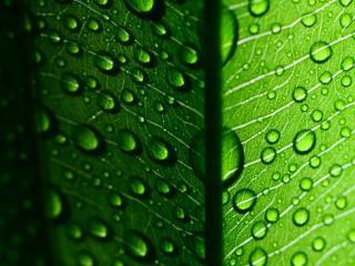 обои Капли воды на светящемся листе фото