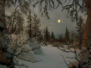 обои Лунная зимняя ночь в лесу фото