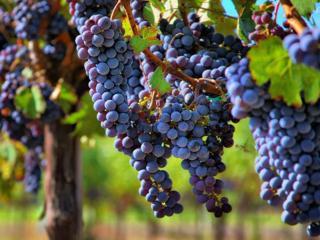обои для рабочего стола: Виноград Лефкадии