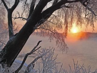 обои Дерево,   солнце,   зима фото
