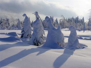 обои Зимние тени леса фото