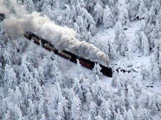 обои Поезд среди заснеженных елей фото