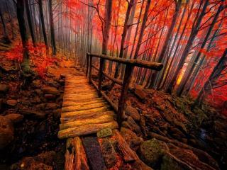 обои Яркий осенний лес фото