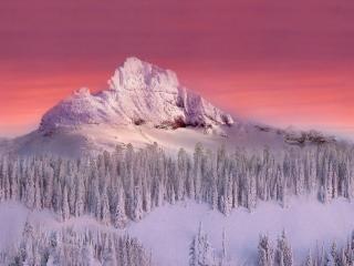 обои Снежная вершина горы в алом закате фото