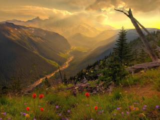обои Горное ущелье поросшее лесом и цветами фото