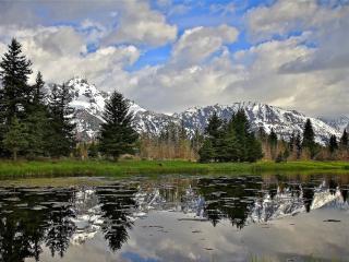 обои Лесное озеро в горах, покрытое тиной фото