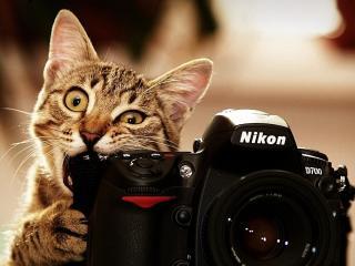 обои Кот грызет Nikon фото