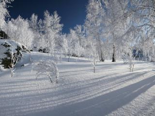обои Белизна зимнего дня фото