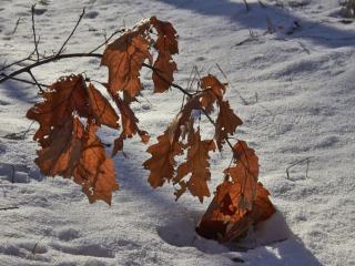 обои Осень и зима фото