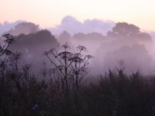 обои Сиреневый туман фото