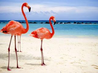 обои Фламинго на отдыхе фото