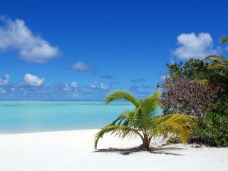 обои Белый пляж с небольшой пальмой фото