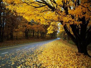 обои Осенняя дорога в кленовых листьях фото