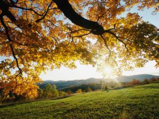 обои Солнечный день в осенних горах фото