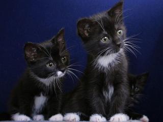 обои Чёрное и белое фото