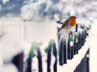 обои Птичка с оранжевой шеей на ограде фото