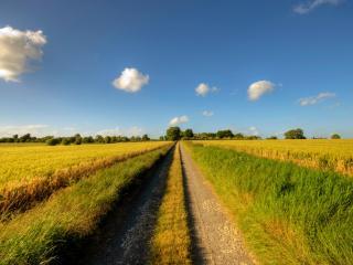 обои Прямая дорога в зеленом поле фото