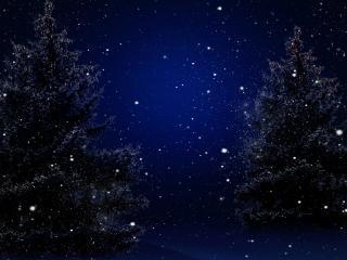 обои Ночной снег у елей фото