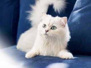 обои Сосредоточенная белая кошечка на диване фото
