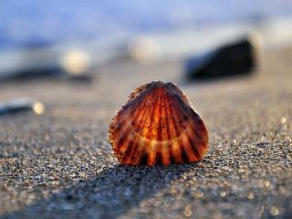 обои Ракушка на берегу моря фото