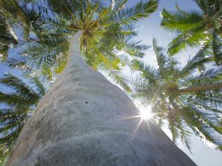 обои Ствол пальмы фото