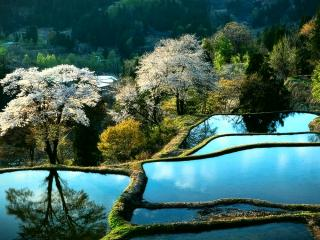 обои Японский пейзаж фото
