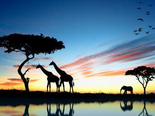 обои Африканская саванна фото