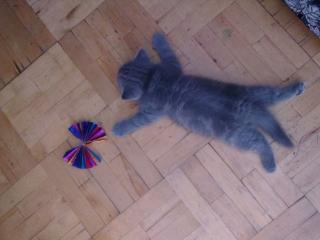 обои Маленький котёнок устал фото