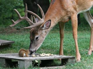 обои Мир и дружба животных фото