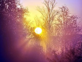 обои Сиреневое утро в лесу фото