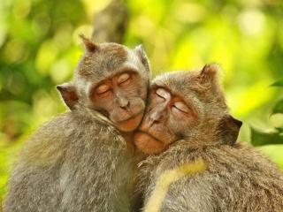 обои Фиджи – лучшее место для влюбленных… фото
