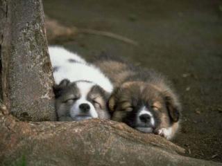 обои Две спящих мордашки фото