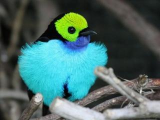 обои Птичка с разноцветным опереньем фото
