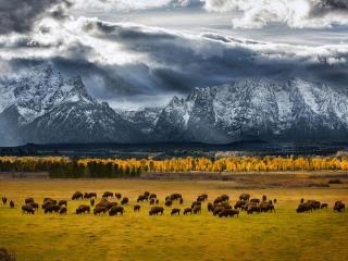 обои Там,   где бродят бизоны. Национальный парк Гранд-Титон на северо-западе штата Вайоминг фото