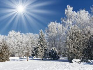 обои Зимний парк под слепящим солнцем фото