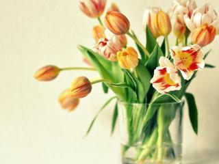 обои Букет тюльпанов в стакане фото