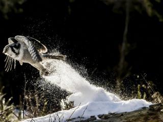 обои Зимний старт совы фото