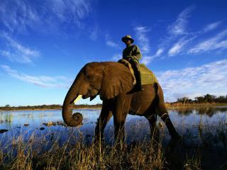 обои Погонщик на слоне фото