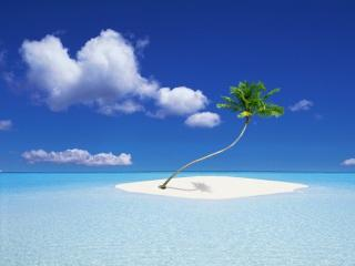 обои Кокосовая пальма на белом островке фото