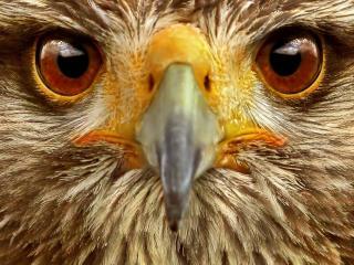 обои Морда совы крупным планом фото