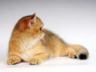 обои Симпатичный котенок обернулся фото