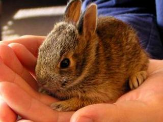 обои Маленький кролик на ладони фото